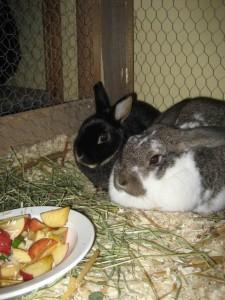 Törnrosa och Tess